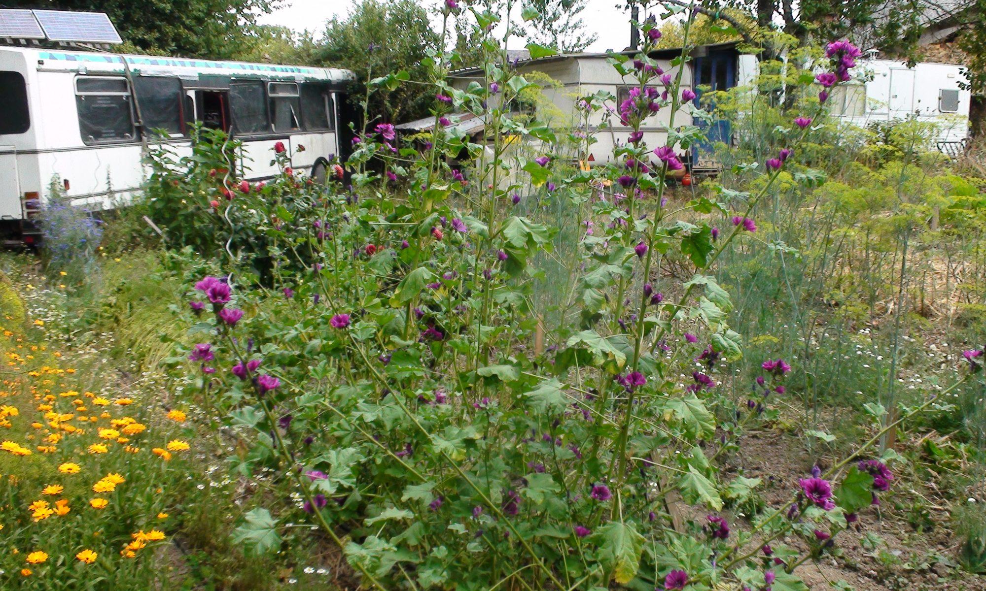 Le Tres Petit jardin